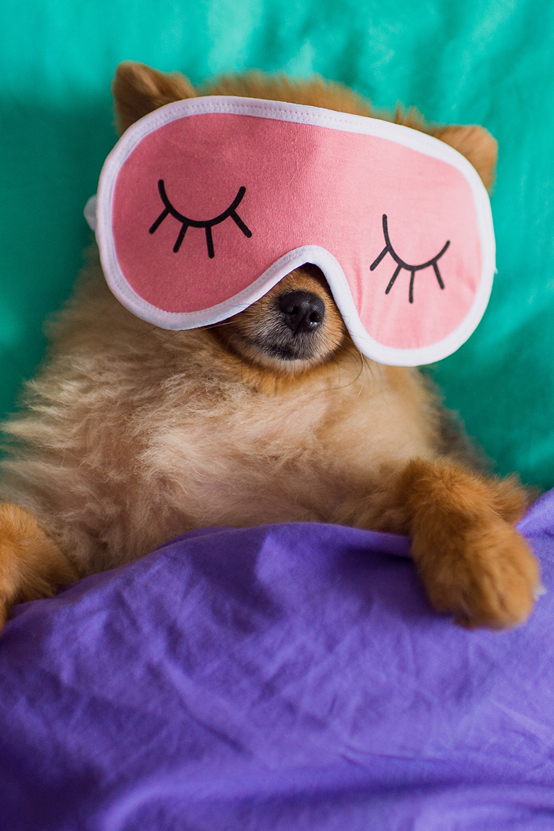 Sleeping dog in a funny mask