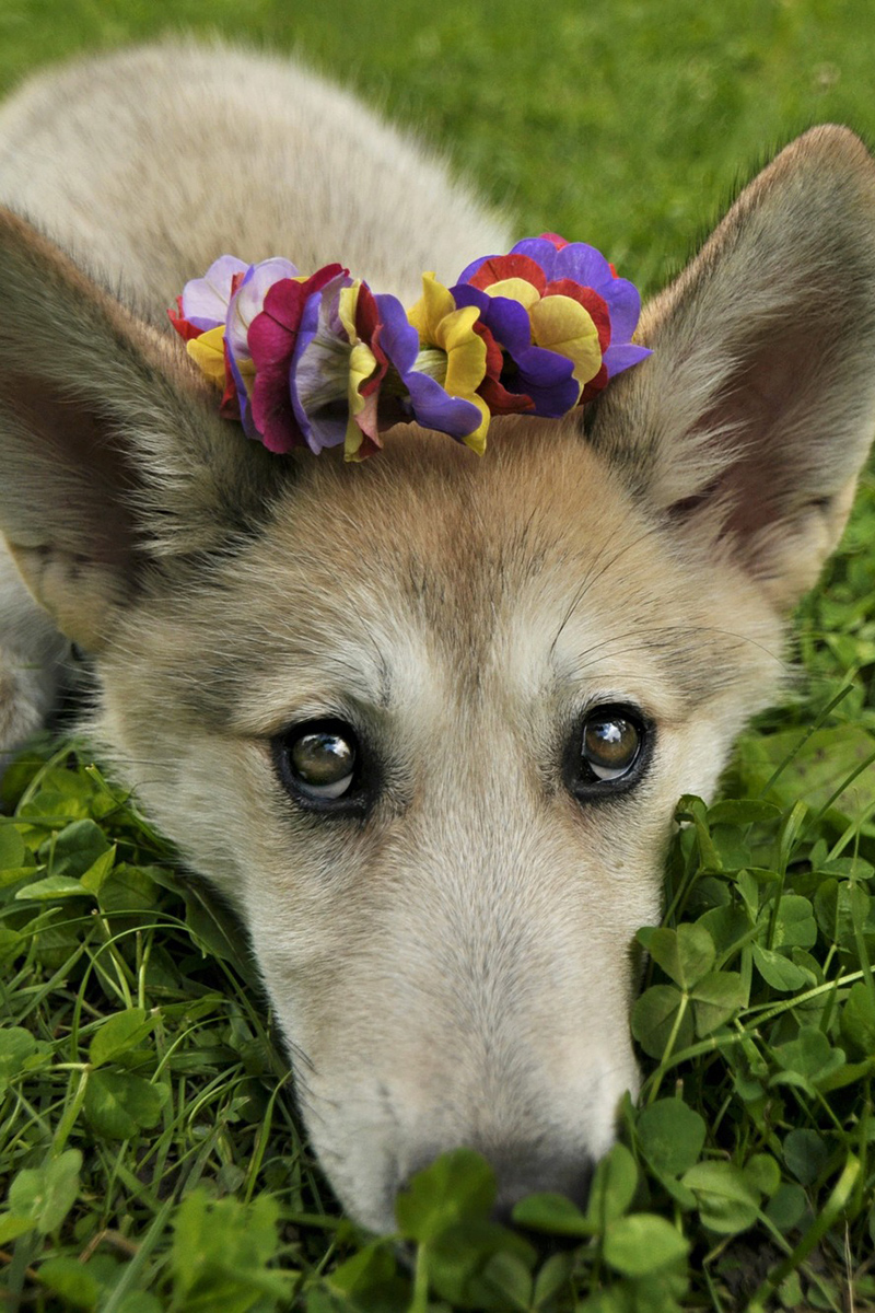Cute dog with flowers on a head