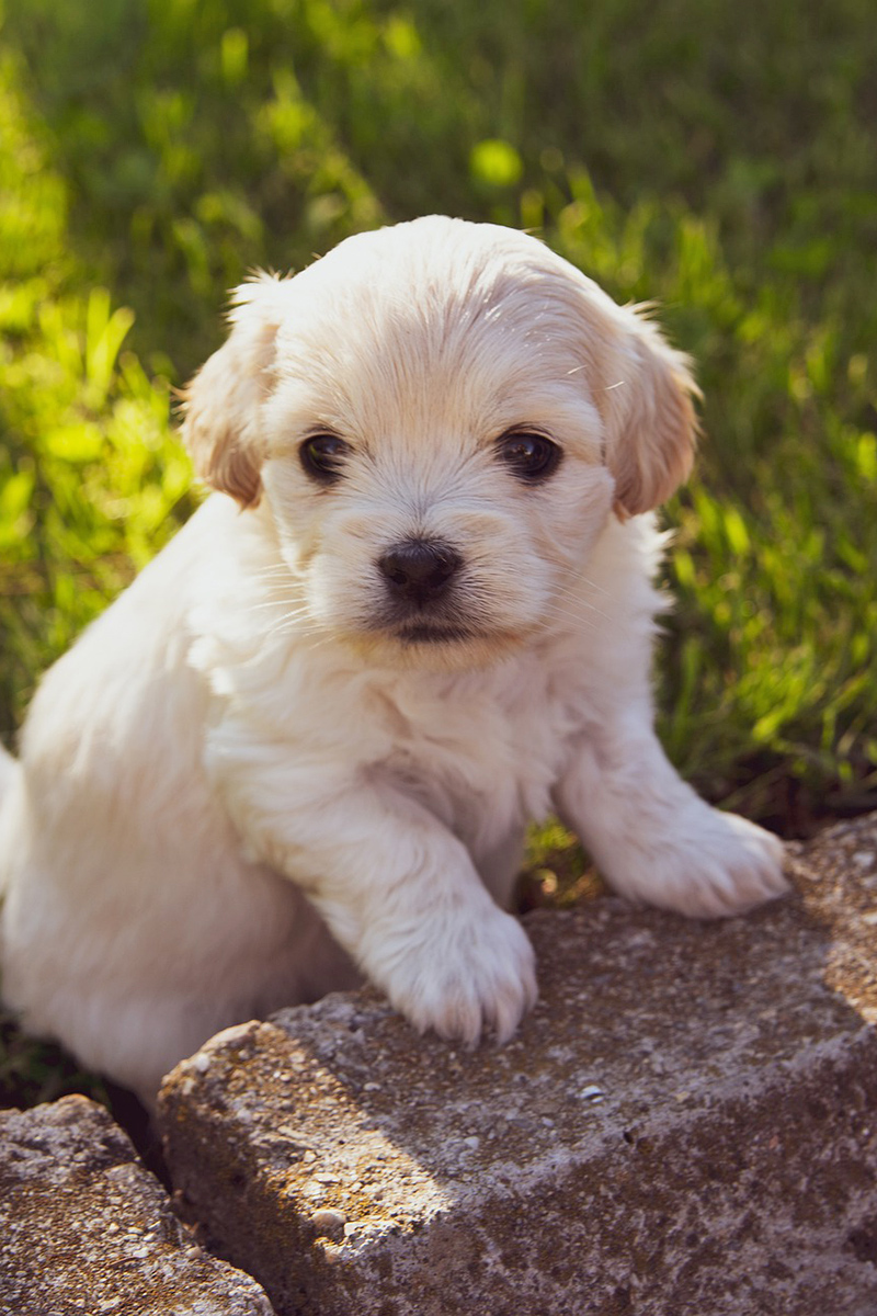Small cute puppy outdoors
