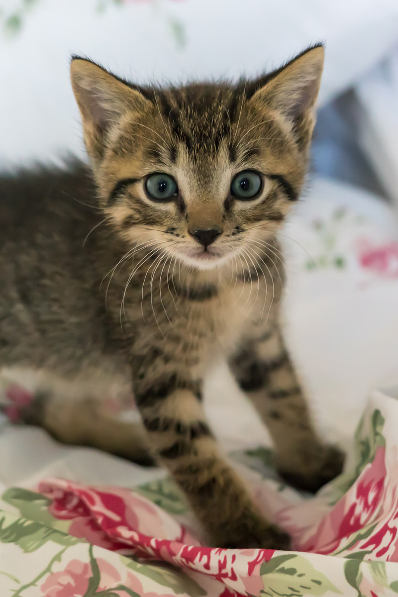 Admirable cute kitten on the bed