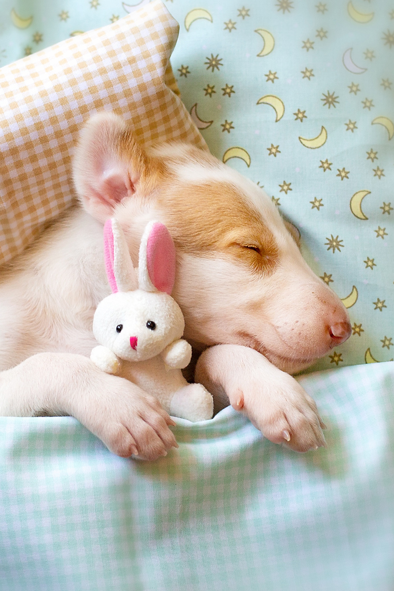 Cute puppy is sleeping with a toy in a bed
