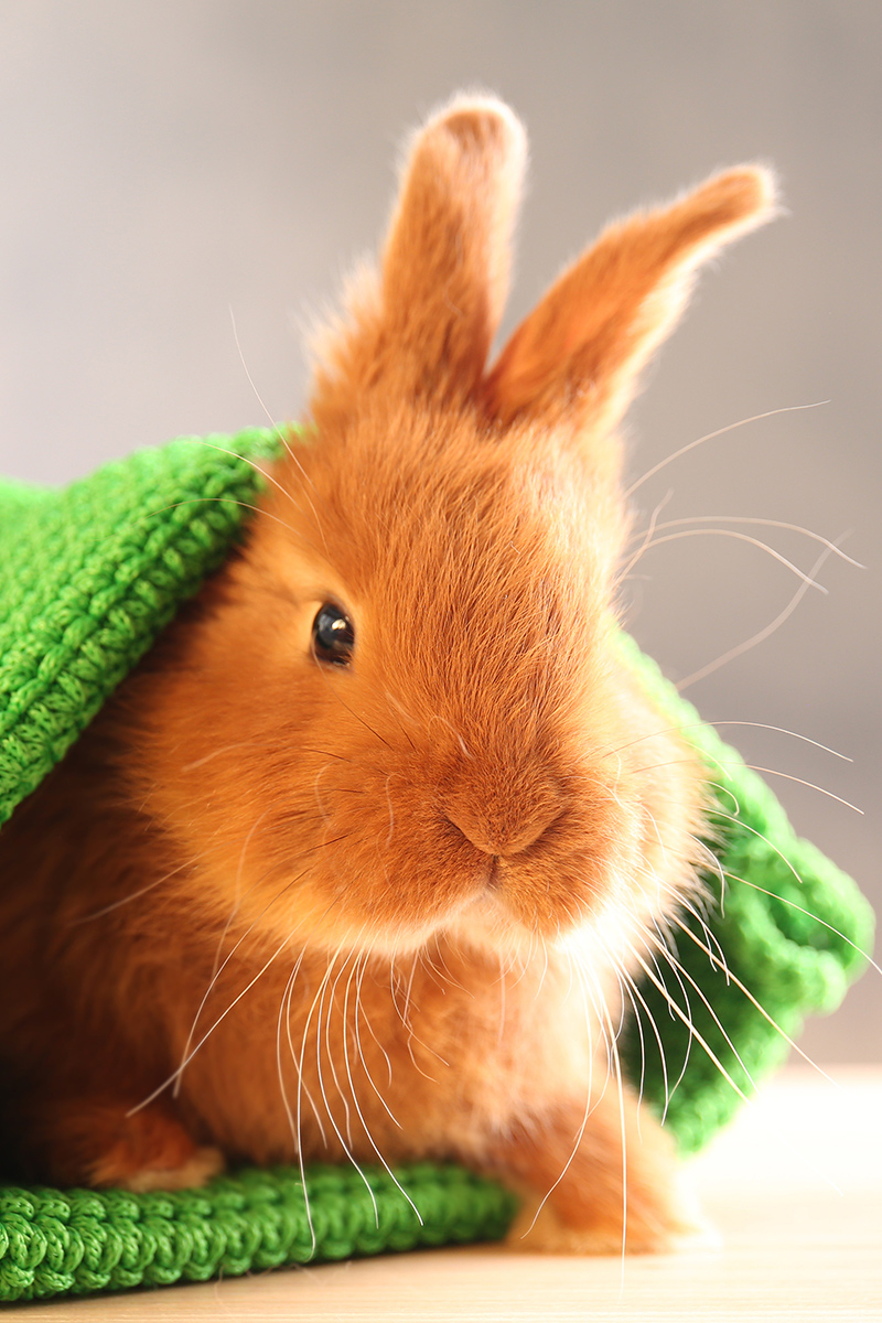 Cute rabbit in a hat