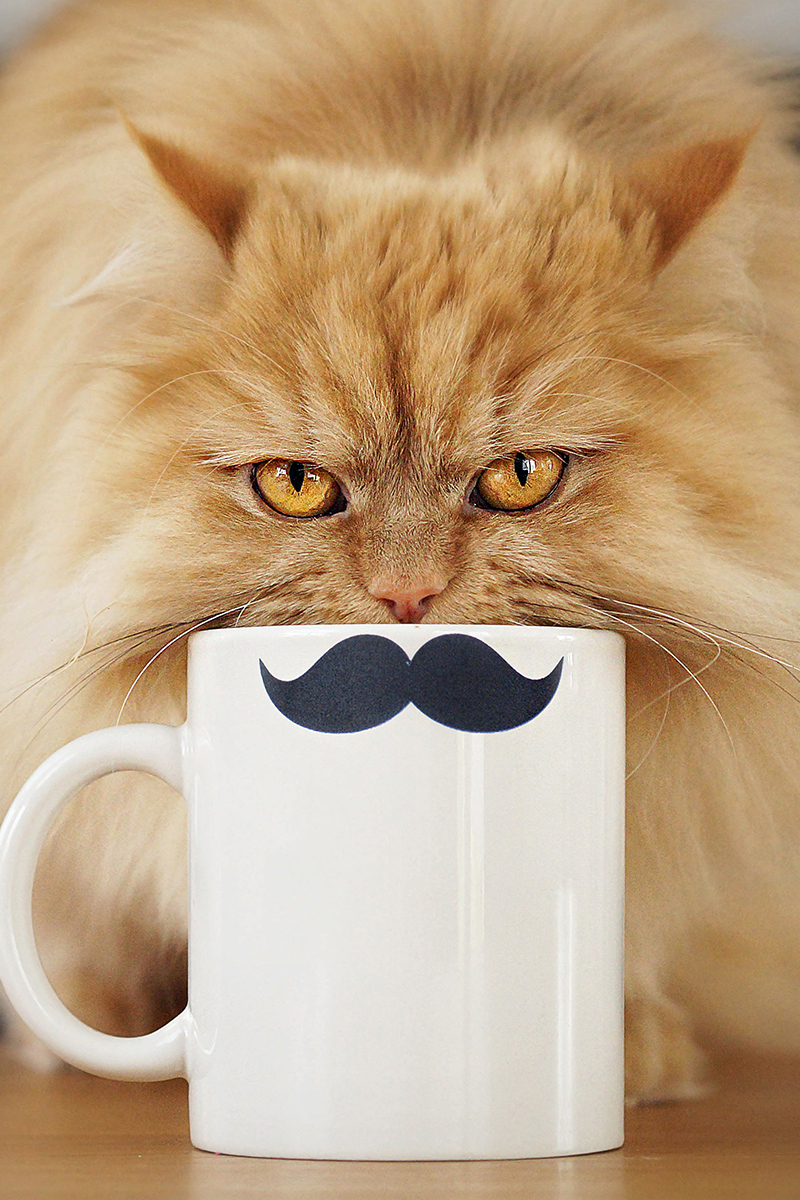Funny picture cat and cup