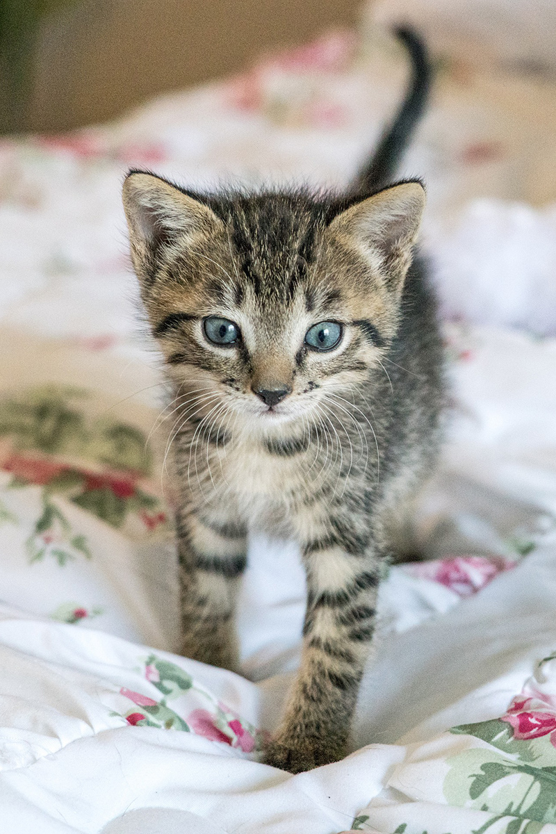Cute kitten looks so wonderful