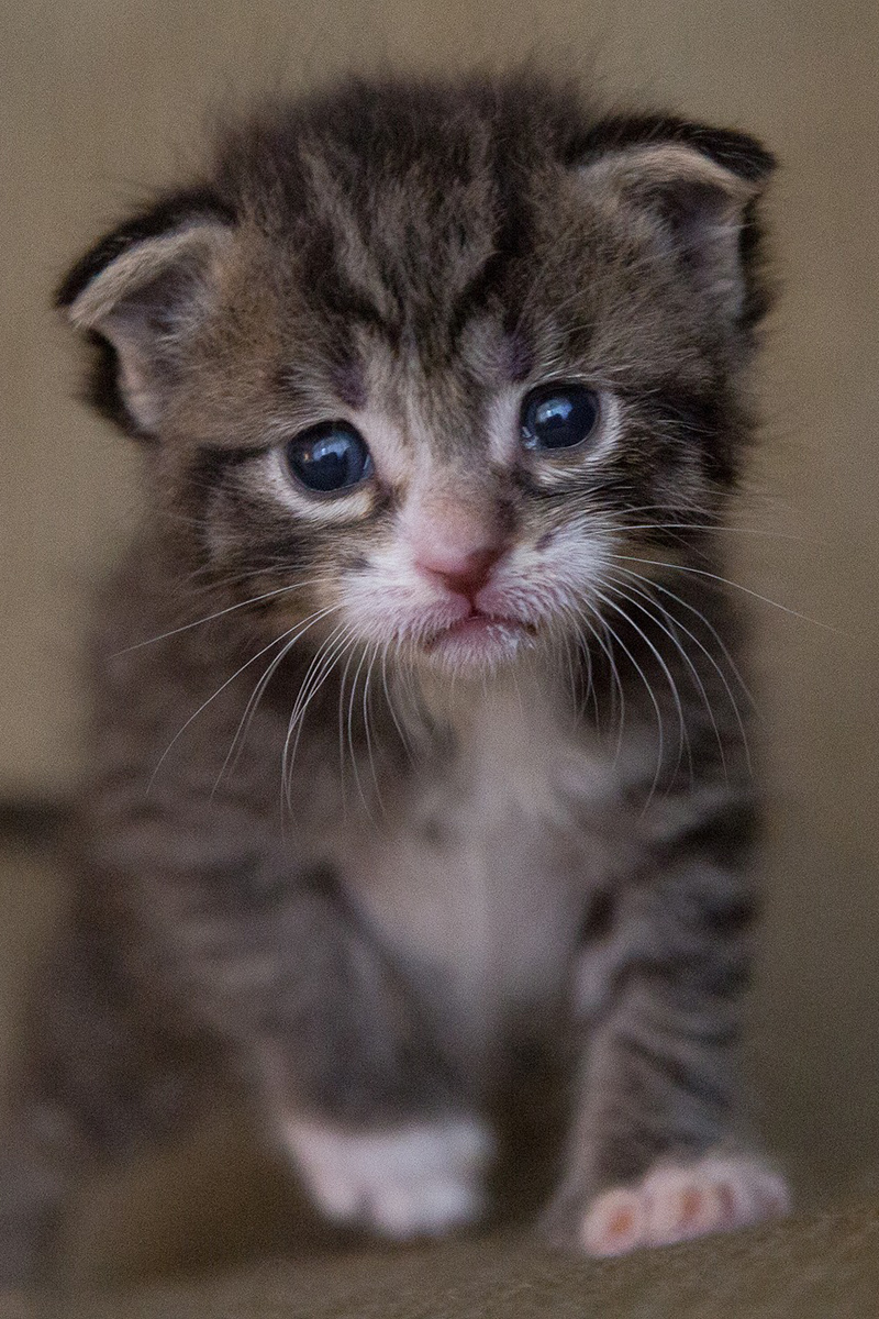 Cute kitten looks so sad