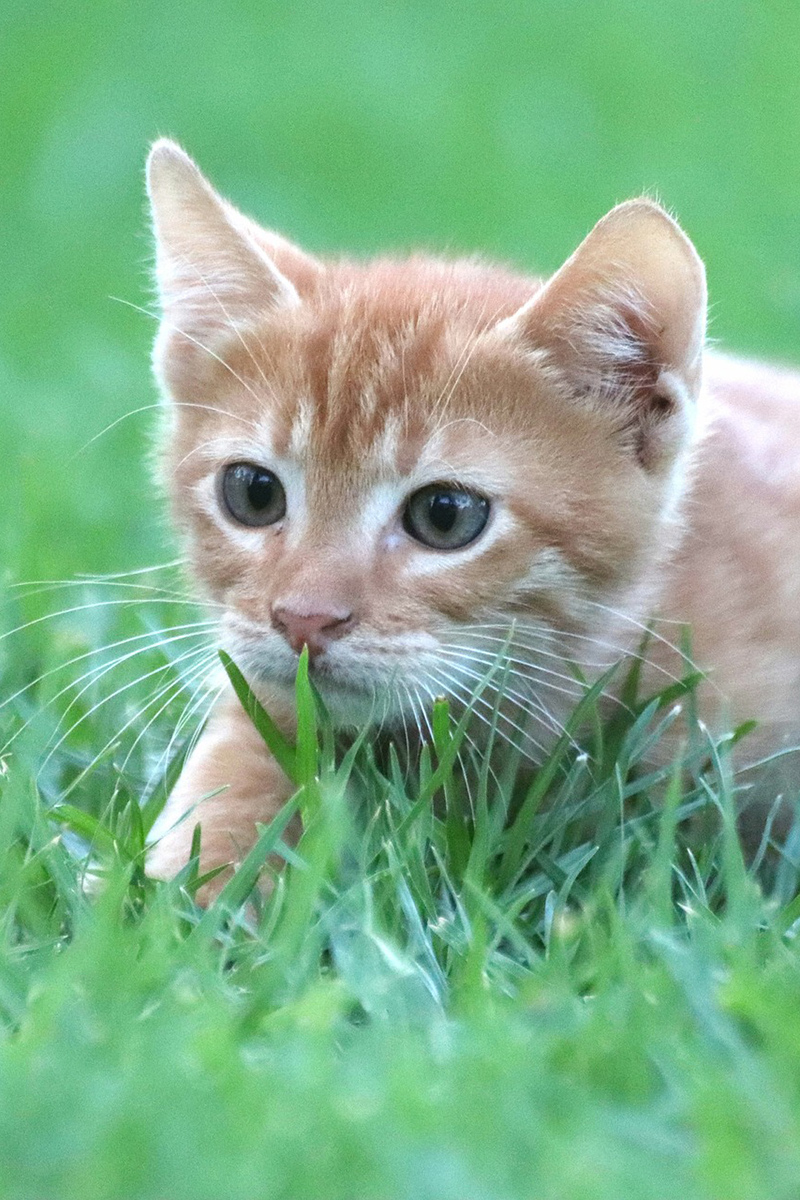 Cute red kitten in the grass