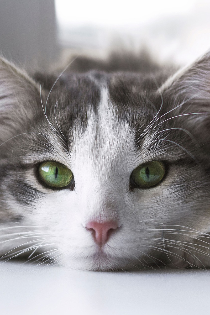 Beautiful cat with wonderful eyes