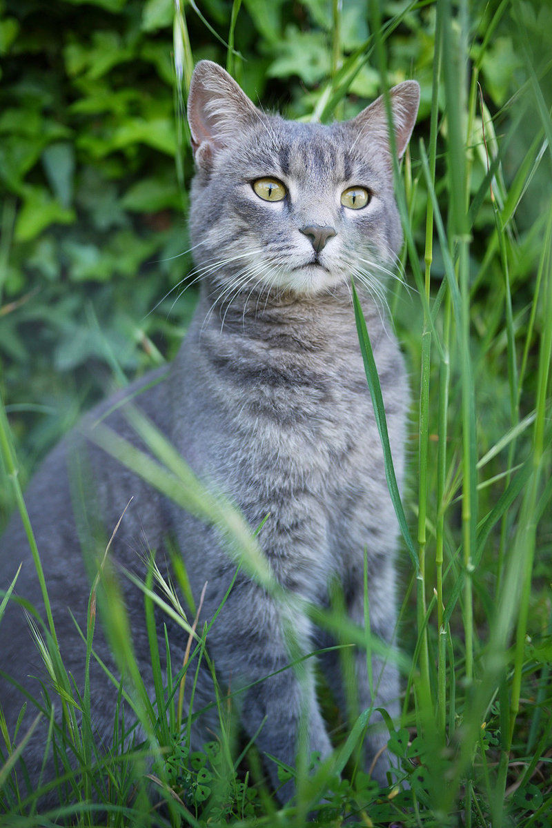 Delectable cat in the grass
