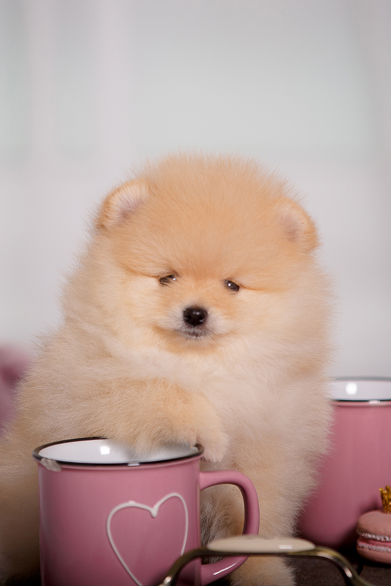 Fluffy cute puppy with a cup