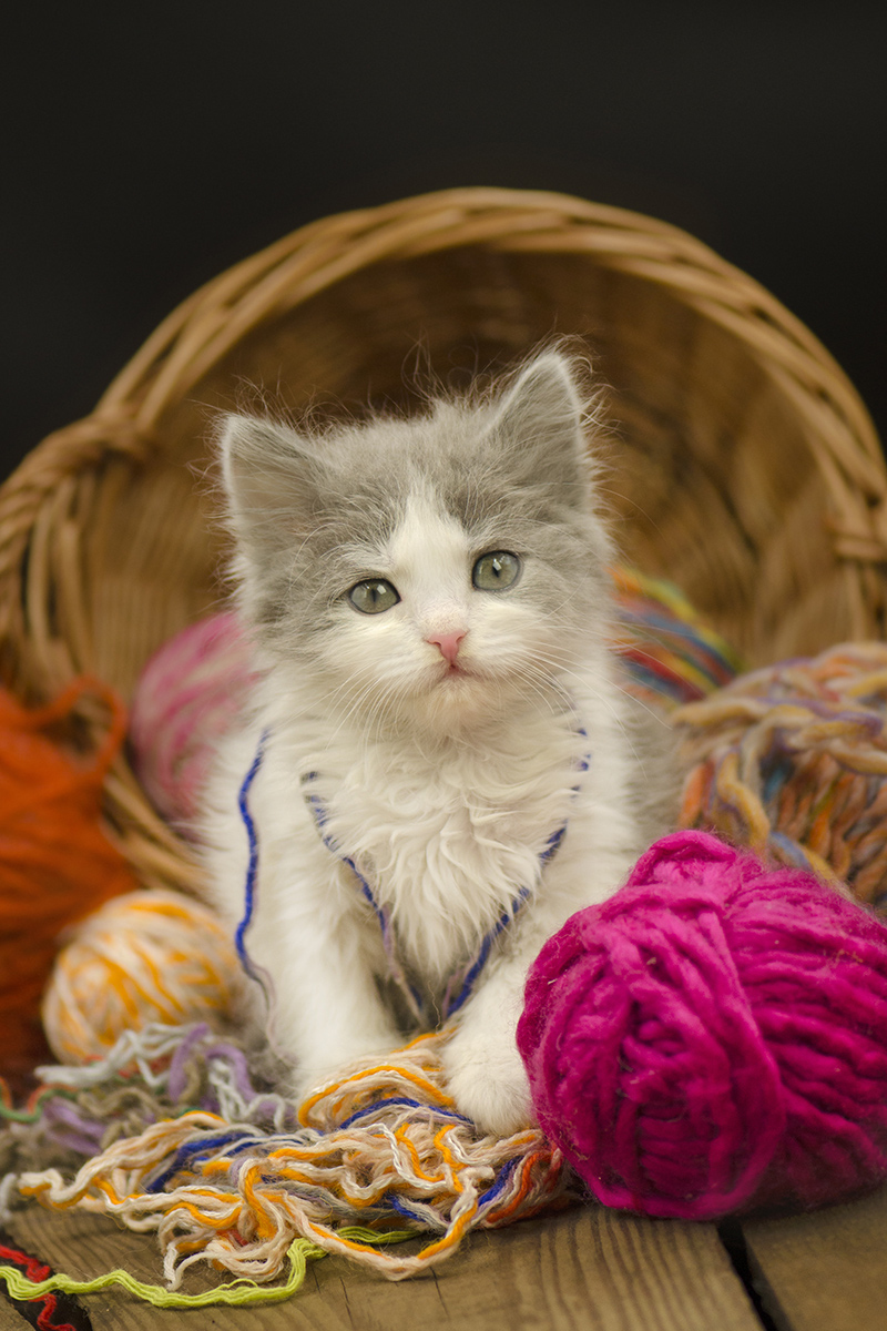 Cute kitten with a ball of thread