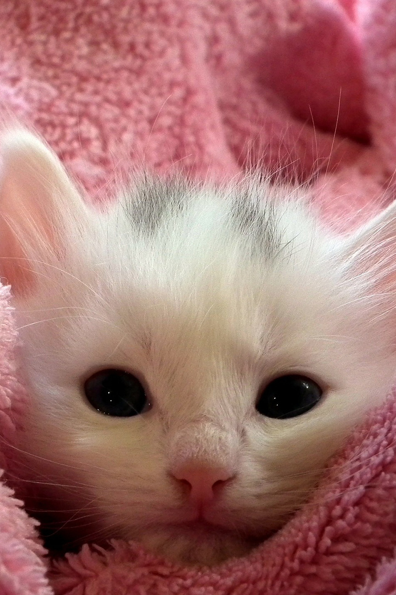 Adorable little kitten in the towel