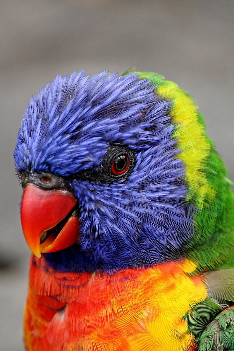 Delightful parrot has so many colors