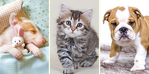 10 Pics with Cute Animals for a Good Day