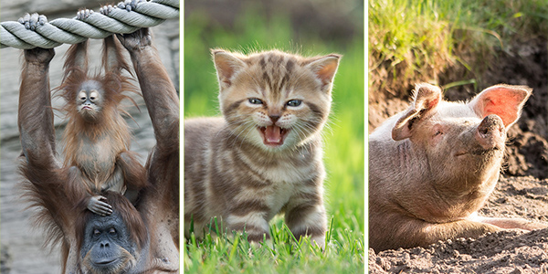 12 Cute Animals To Bring Your Mood Up