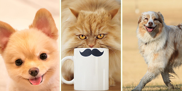 12 Pictures with Cute Cat and Dogs to Lift the Mood