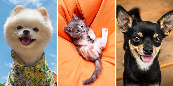 10+ Beautiful and Cute Animals to Make You Feel Better