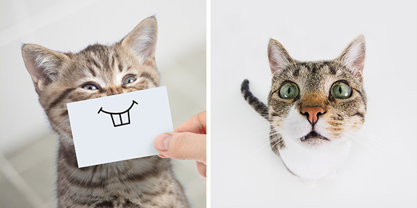 10 Funny Cats and Cute Kittens to Get Your Mood Up