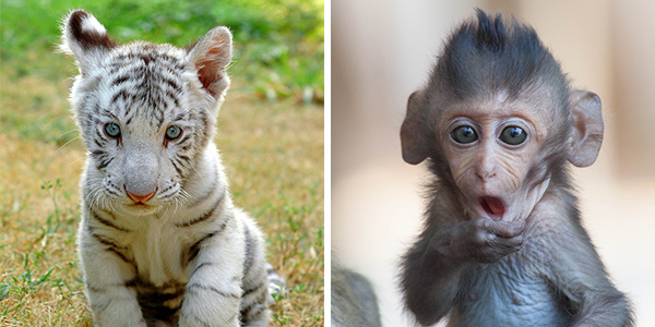 10 Pics with cute animals to bring your mood up